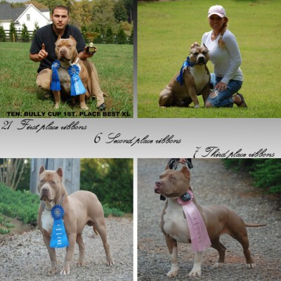 Xxl pitbull breeders in georgia